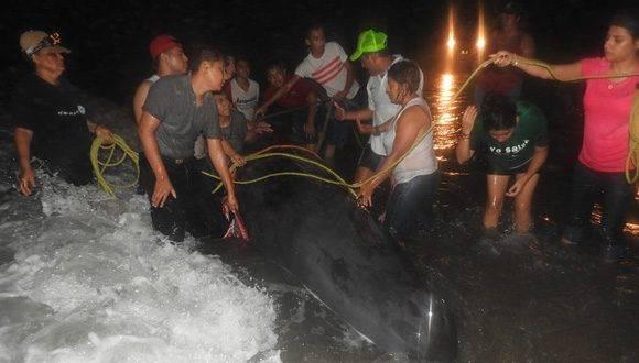 El equipo que ayudó a mantener a la ballena con vida. Foto: Fundación Yépez.