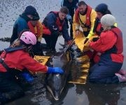 Este grupo de voluntarios logró zalvar al delfín en Escocia. Foto: SMASS.