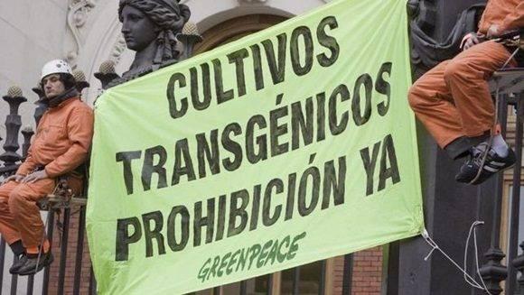Activistas de Greenpeace en una de sus campañas en contra de los transgénicos EFE.