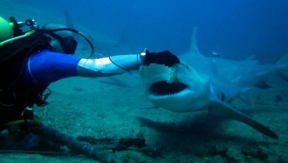 Show Especial con Tiburones Toro en el polo turístico de la playa de Santa Lucia, al norte de Camagüey. Foto: Centro Internacional de Buceo Shark's Friends