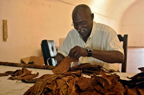 El famoso tabaquero cubano José Castelar Cairo (Cueto), ya posee el récord del tabaco más grande del mundo, pero pretende ampliarlo. Foto: Yailín Alfaro Guillén/ JR .