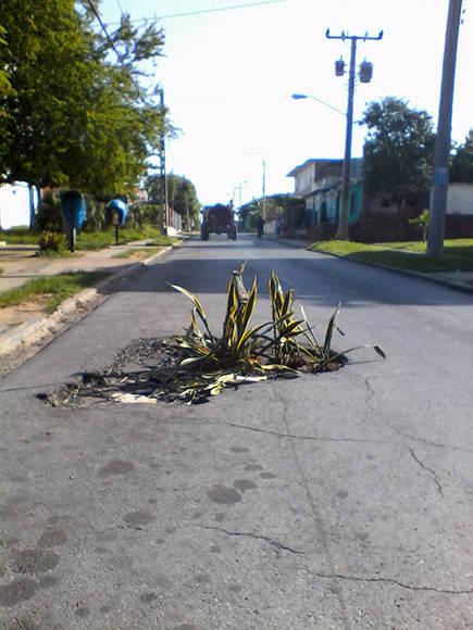Foto del Dia-Pinar del Rio