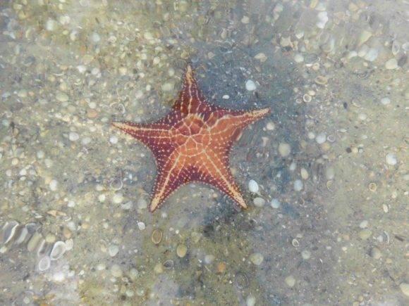 Yo soy la estrella. Playa del Hotel Colony, Isla de la Juventud. Foto: Alexis Yero Díaz, CIGB / Cubadebate