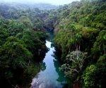 bosques + cuba