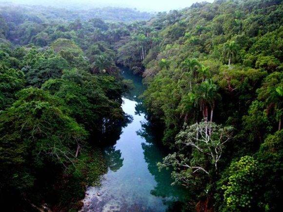 Bosques en Cuba. Foto: Granma.