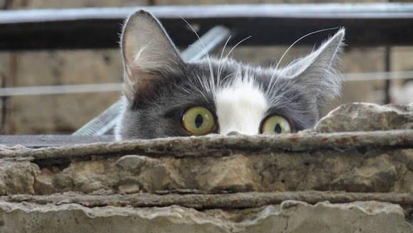 gatoescondido