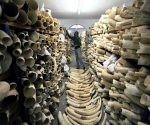 comercio de marfil comercio de elefantes