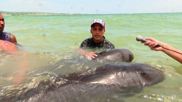 delfines-4