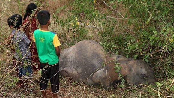 Niños observan el cadaver de un elefante en Sri Lanka. Foto: AFP.