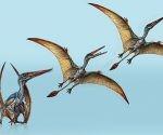 Así debió ser este pterosaurio. Imagen: Gabriel Lío/ el Museo Paleontológico Egidio Feruglio.
