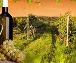 vino_logito