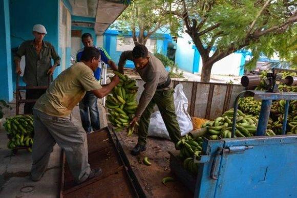 Distribución de viandas para los lugares de evacuación, una de las medidas puestas en práctica ante la amenaza del huracán Matthew, en la ciudad de Las Tunas, Cuba, el 2 de octubre de 2016. Foto: Yaciel Peña de la Peña / ACN