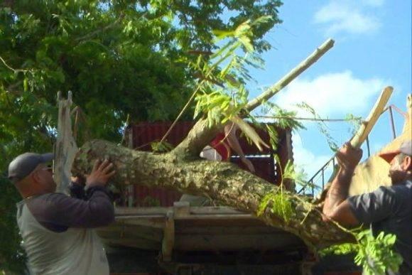Poda de árboles en Ciego de Ávila Foto: Cuenta en Facebook del periodista Iván Paz Nogueira