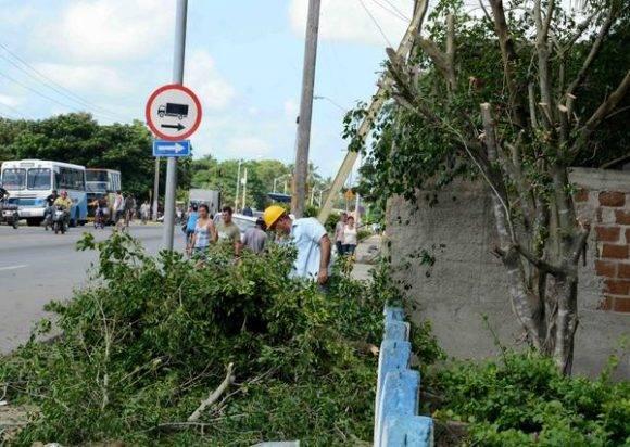 Tareas de poda de árboles, higienización y limpieza de ríos y puentes, son acciones adoptadas por el Consejo de Defensa Provincial en Camagüey, Cuba, ante la amenaza del huracán Matthew, el 2 de octubre de 2016. Foto: Rodolfo Blanco Cué / ACN