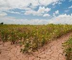 agricultura_y_cambio_climatico
