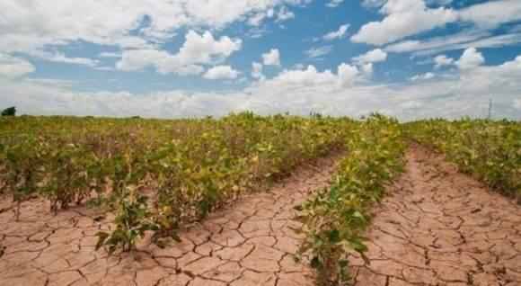 El estudio Estado de la Alimentación y la Agricultura 2016 se concentra en la relación entre cambio climático, agricultura y seguridad alimentaria.