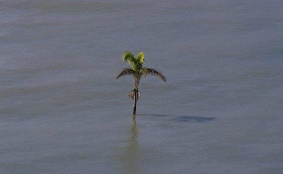 Palma en la playa de Duaba. Foto: Ismael Francisco/ Cubadebate