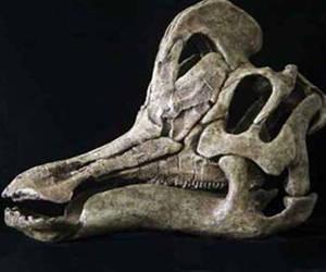 Hallan nueva especia de dinosaurio en México.