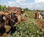 La mayor parte de la suma ha sido destinada a formas productivas del sector agropecuario. Foto: ACN