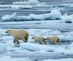 Se estima que quedan en el mundo entre 22 mil y 31 mil osos polares. Foto: NASA.