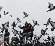 People walk next to pigeons on Taksim square during snowfalls in Istanbul on January 7, 2017. 