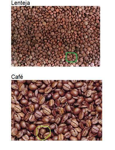 acertijo-cafe-lenteja