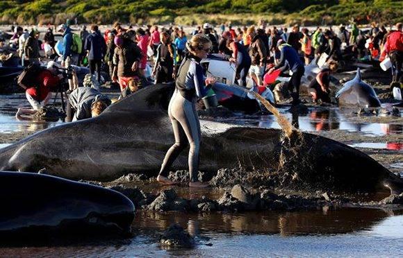 Gracias al trabajo de los voluntarios, al menos un centenar logró volver a nadar en alta mar. Foto: Anthony Phelps/ Reuters.