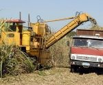 Cuba will start its sugar harvest next November