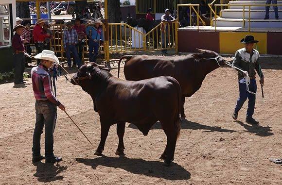 Área de juzgamiento animal para otorgarles los Premios de la Feria. Foto: Ismael Francisco/Cubadebate.
