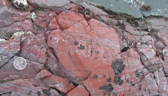 Los expertos descubrieron estos organismos dentro de lava fosilizada. Foto: (Dominic Papineau / University College London)