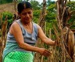 Superar las brechas de género en el mercado laboral podría incrementar en 14 por ciento. Foto: Oxfam.