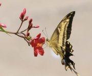 La tira de los lectores: Y dice una mariposa…..