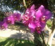 Orquídeas. Foto; Josefina Barrabia / Cubadebate