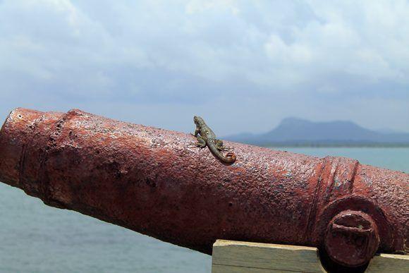 Gibara, al pie del cañón. Foto: Daylén Vega Muguercia / Cubadebate