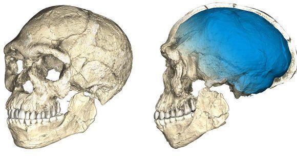 Reconstrucción del cráneo de los primeros Homo sapiens a partir de fósiles de hace 315.000 años hallados en el yacimiento de Jebel Irhoud. Foto: MPI EVA Leipzig.