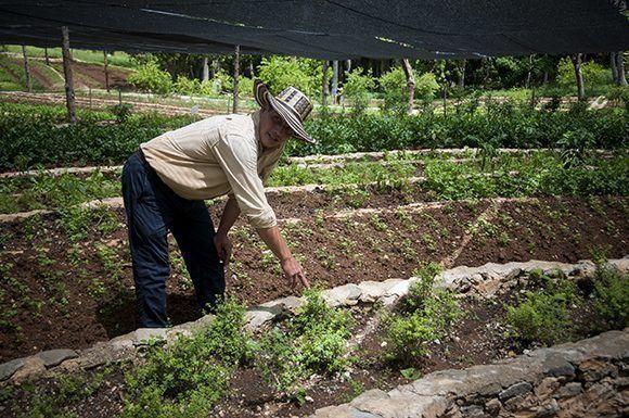 FernandoFunesDoctor en Producción Ecológica y Conservación de los Recursos. Foto: Irene Pérez/ Cubadebate.