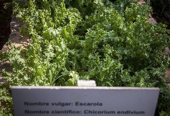 En las ocho hectáreas de Finca Marta se cultivan más de 60 productos al año y a la semana entre 25 y 30. Foto: Irene Pérez/ Cubadebate.