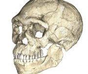 Reconstrucción de un cráneo a partir de los restos de Jebel Irhoud. Foto: MPI EVA Leipzig.