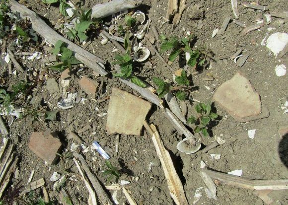 Objetos y fragmentos encontrados en el hallazgo arqueológico. Foto: Cortesía de Orlando Álvarez.