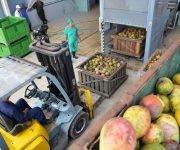 Entrada de la nueva línea para el procesamiento del mango, instalada en el combinado industrial de Ceballos, en Ciego de Ávila, Cuba.  28 de junio de 2017. Foto: ACN/  Osvaldo Gutiérrez.