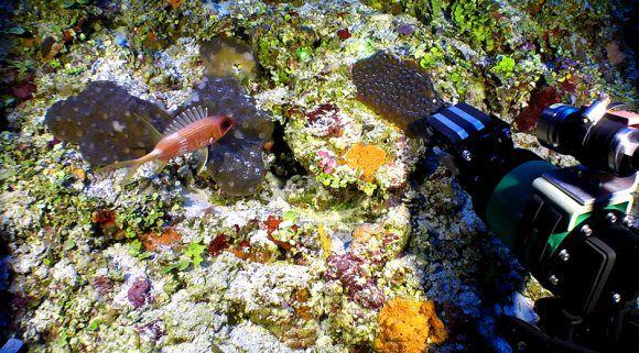 rov-colectando-corales