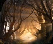 paseo-de-hayas-dark-hedges-irlanda-del-norte-copia