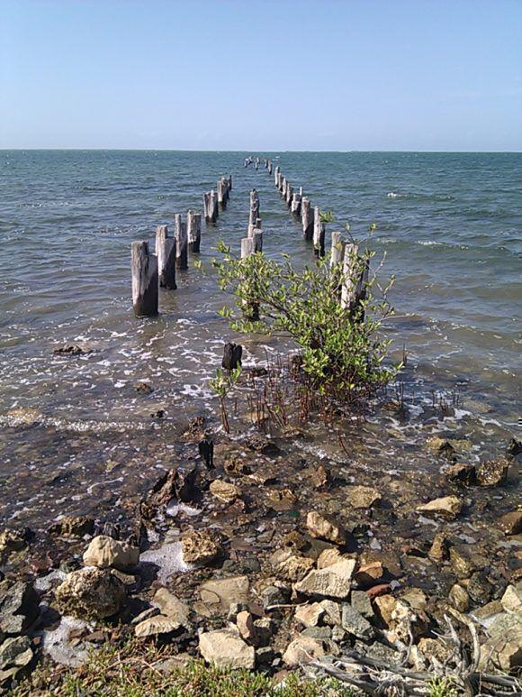 Playa Menéndez, Itabo, Matanzas. Foto: Dr. Oscar M. Villa Jiménez / Cubadebate