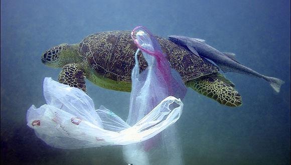 Los océanos están contaminados con millones de toneladas de basura plástica.