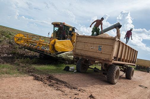 Pinar del Río, tierra para el arroz. Foto: Jaliosky Ajete / Guerrillero