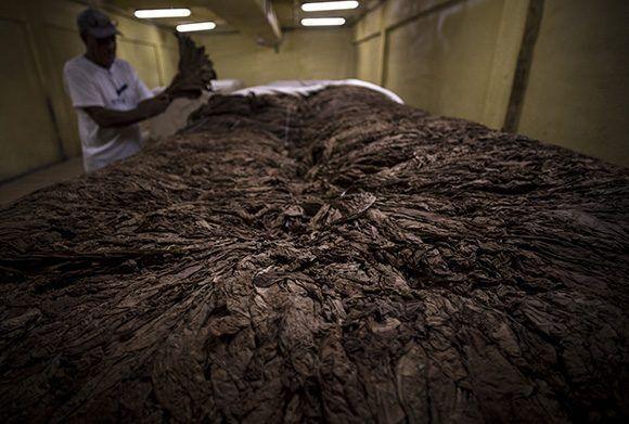 Cámara de fermentación. Foto: Irene Pérez/ Cubadebate.