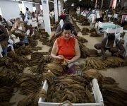 Escogida de tabaco en el municipio San Luis. Foto: Irene Pérez/ Cubadebate.