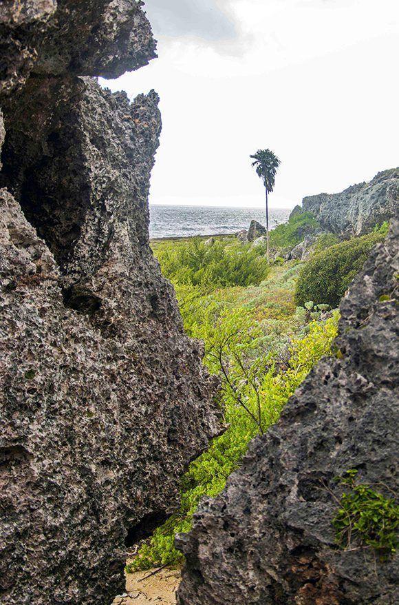 Paisaje costero del Parque Nacional Guanahacabibes, situado en el extremo más occidental del archipiélago cubano, en Sandino, Pinar del Río, Cuba. Foto: ACN/ Rafael Fernández.