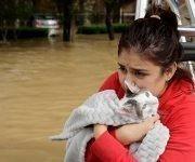 Jannett Martinez sostiene a su gato Gigi, su vecindario fue inundado, tormenta tropical Harvey el martes, 29 de agosto de 2017, en Houston, Texas. Foto: AP.