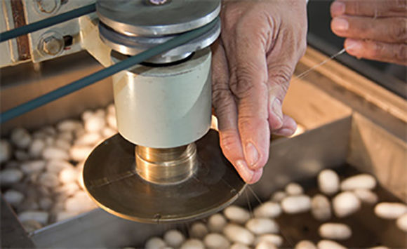 China ha estado cooperando con Cuba desde hace cinco años y aquí hay un pequeño campo experimental de sericultura en funcionamiento.